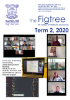 FIGTREE Newsletter - Term 2 2020